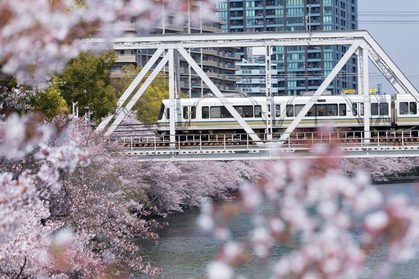 Hanami Guide: Where to see Cherry Blossoms in Tokyo, Kyoto & Osaka