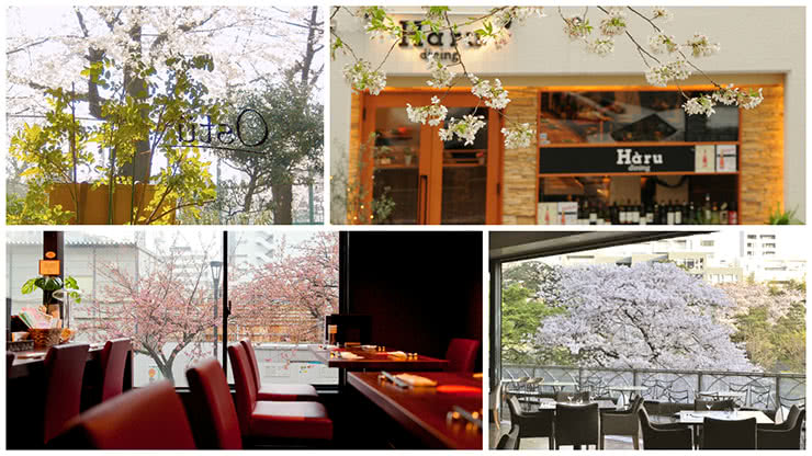 Dining Amidst Sakura in Tokyo: 4 Lush Bistros with a View