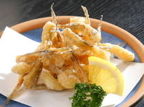 "Gochisodokoro Shohachi_The seasonal summer fish of Senju fried until deliciously crisp: our ""Fried Gatcho"""