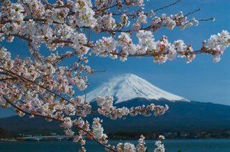 Mt Fuji Shizuoka In Shizuoka Savor Japan Japanese Restaurant