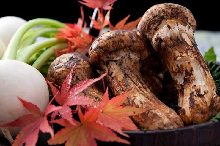 The king of Japanese mushrooms. Matsutake.