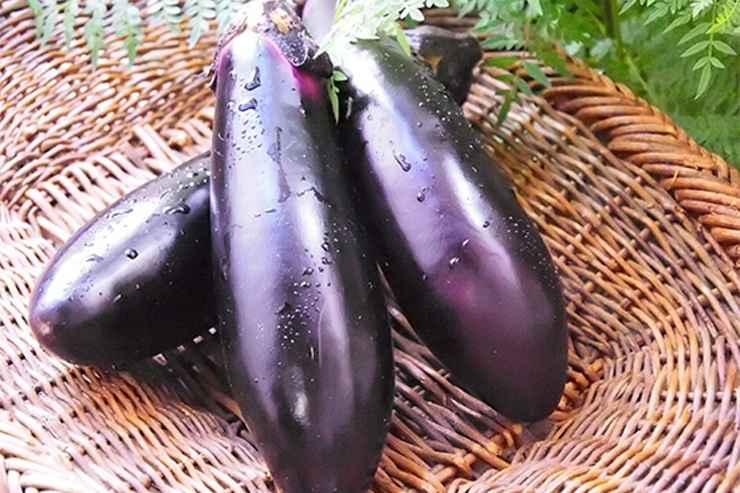 The luckiest vegetable in Japan. Nasu.